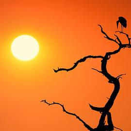 Impalila Island Sunset No. 2 by Joe Bonita