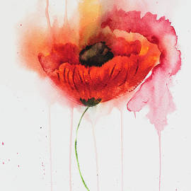 Impressionistic Watercolour Poppy by Carolyn Rauh