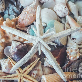 Colleen Kammerer - In a Sea of Shells-