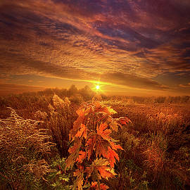 Phil Koch - In Perfect Solitude There Is Grace