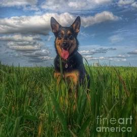 In The Country. #dogs  #gsd