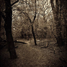 Cendrine Marrouat - In the forest