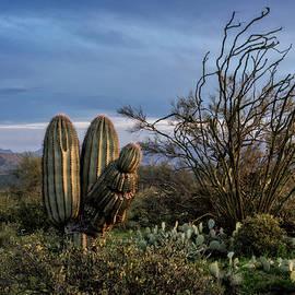 Saija Lehtonen - In The Green Desert