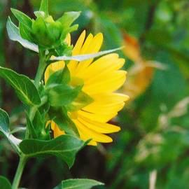 Honey Behrens - In The Sunflower State of Kansas