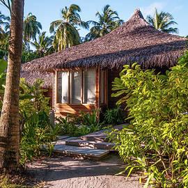 In the Tropics  by Jenny Rainbow