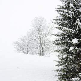 Nicola Simeoni - In the woods during snowfall