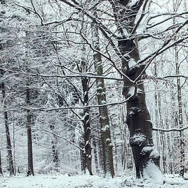 Jenny Rainbow - In Winter Sleep