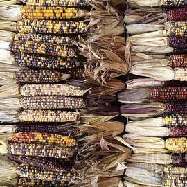 Indian Corn by Robin Maria Pedrero