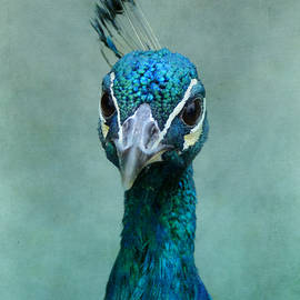 Indian Peacock's Gaze by Carla Parris