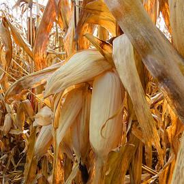 Tina M Wenger - Indiana Corn 3