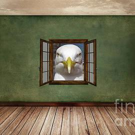 Indignant Seagull Interior Design by Terri Waters