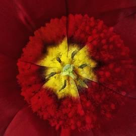 Pedro Vit - Inexistent flower 1