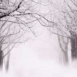 Roeselien Raimond - Infinity - Trees covered with hoar frost on a snowy winter day