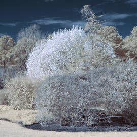 Infrared Bushes by Paulette B Wright