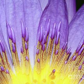 Judy Whitton - Inner Glow