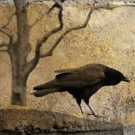 Gothicrow Images - Inquisitive Raven
