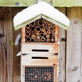 Insect nesting box - Tom Gowanlock