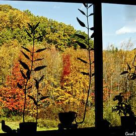 Inside Looking Outside at Fall Splendor by Carol F Austin