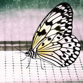 Jaroslav Buna - Interview with butterfly