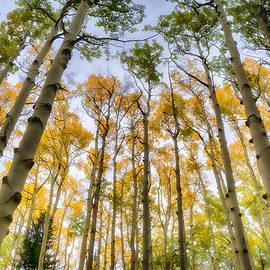 Saija  Lehtonen - Into The Aspen Forest