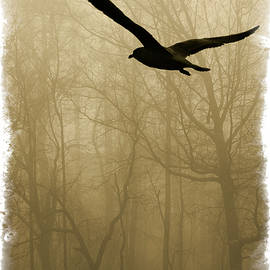 Into The Fog by Harry Spitz