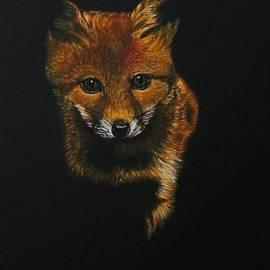 Bob Williams - Into The Light......Fox Kit