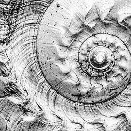 Into The Spiral 2 by Jaroslav Buna