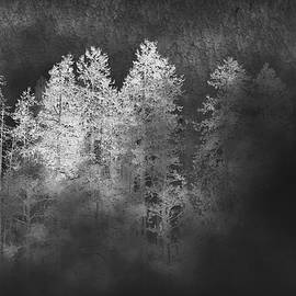 Michael Morse - Inversion Forest