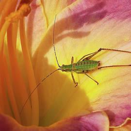 Kathi Mirto - Investigating Bug