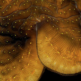 Iridescent Coral