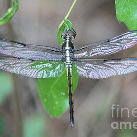 Iridescent Wings by Maili Page