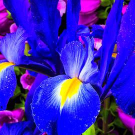 Iris And Foxglove - Garry Gay
