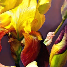 Iris Art by Susan Kinney