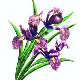 Laura Wilson - Iris Bouquet