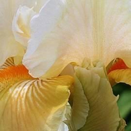 Bruce Bley - Iris Closeup