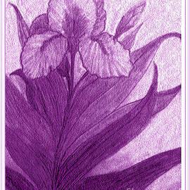 Debra Lynch - Iris in Purple