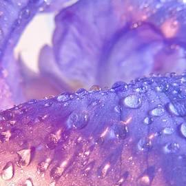 Iris Jewels by Barbara St Jean