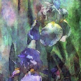 Iris Patch 9961 Idp_2 by Steven Ward