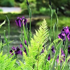 Irises and Ferns by Mary Ann Artz