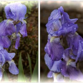 Irises In Springtime by Ola Allen