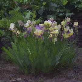 Tricia Marchlik - Irises In The Abstract