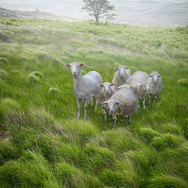 Debra and Dave Vanderlaan - Irish Farmlands