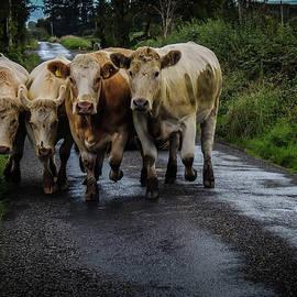 Irish Traffic Jam by James Truett