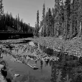 Heidi Fickinger - Isa Lake Yellowstone National Park