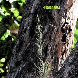 William Tasker - Isaiah 61 Verse 1