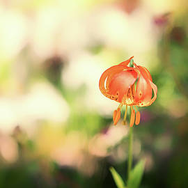 Isolated Beauty by Marnie Patchett