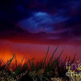 It's A Monsoon RED ALERT by Janet Marie