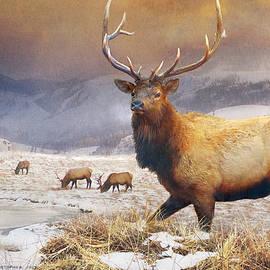 R christopher Vest - Jackson Hole Refuge Bull Elk