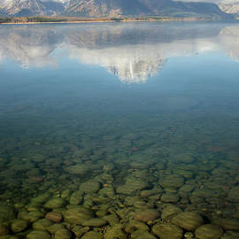 Wildlife Fine Art - Jackson lake Shore