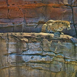 Allen Beatty - Jaguar # 1